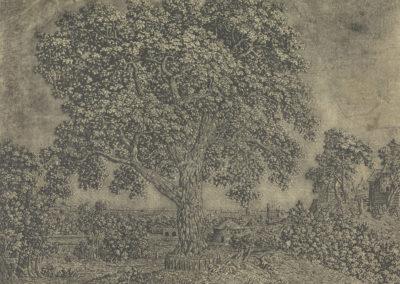 De grote boom (ca 1628), lijnets met toon en hooglichten, collectie Rijksmuseum Amsterdam