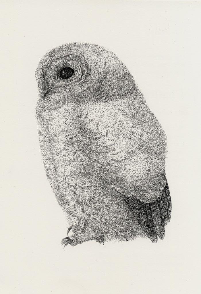 Charles Donker: Jonge bosuil, ca. 1975, Ets